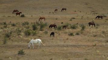 wilde Pferde grasen auf trockenen Hügeln