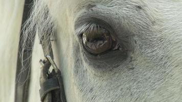 Equine Eye video