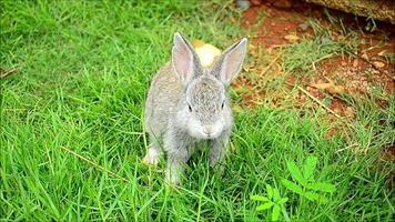 comer conejo video