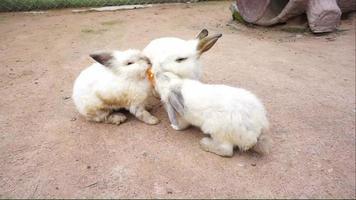 Little bunny in the farm