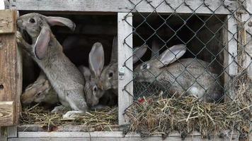 conejos en una conejera video
