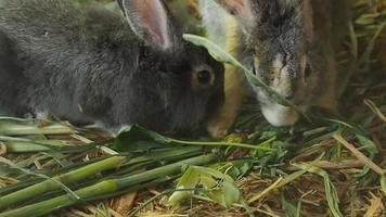 coniglio che mangia erba verde.