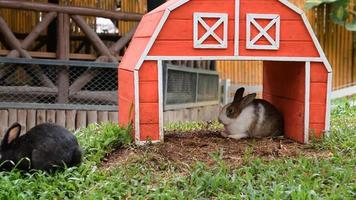 casa de coelhos de madeira com coelhos