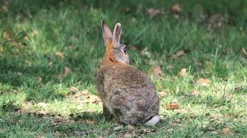 conejo se escapa video