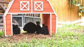 casa de coelhos de madeira com coelhos video