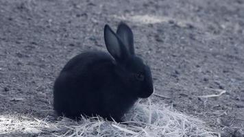 fauna a infrarossi: coniglio bambino che mangia erba