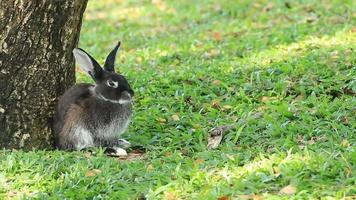 conejos video