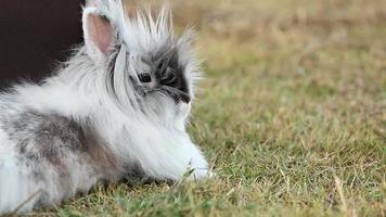 Conejo video