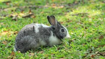Rabbits video