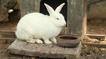 Rabbit video