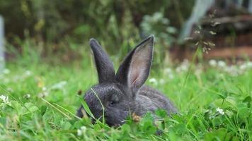 conejito gris en una hierba
