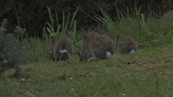 conejos alimentando video