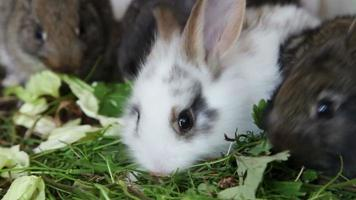 familia de conejos comiendo hierba video