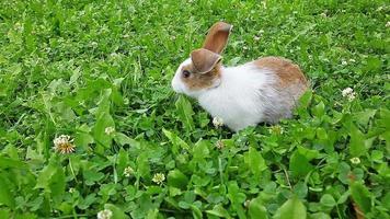 conejo en un césped verde video