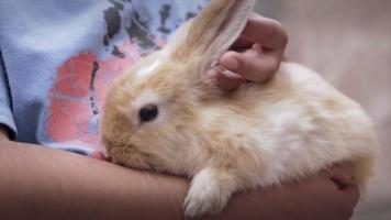 Caressing rabbit video