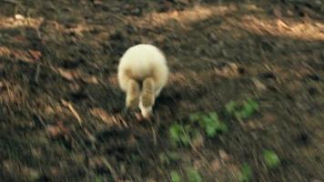 ¡Corre, conejo! video
