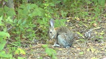 Rabbit - HD