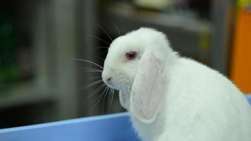 conejo blanco. video