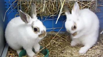 coelhos engraçados