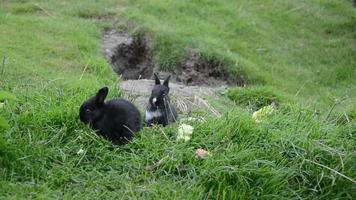 lindos conejos sentados en el césped