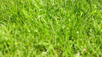 conejito en la hierba de primavera hd video