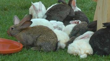 conejos en la granja video