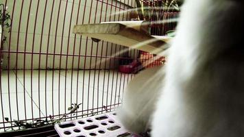 Rabbits in cage from inner viewpoint