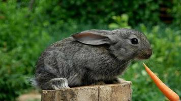 Conejo. alimentando animal video