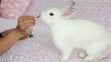 niñas alimentando conejos. video