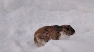 conejo cava nieve video