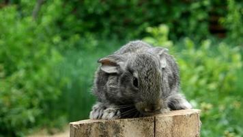 Conejo. alimentando animal