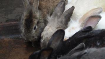 i conigli bevono acqua.