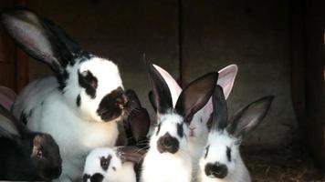 conejos en jaula