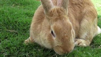 Rabbits, Bunny, Hare