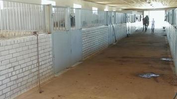 cavallo e addestratore in stalla