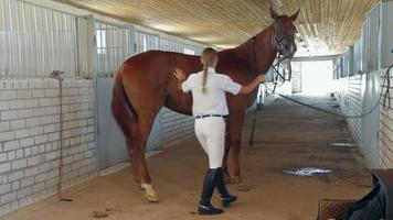 preparazione per passeggiate a cavallo