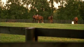 Pferde auf dem Feld bei Sonnenuntergang video