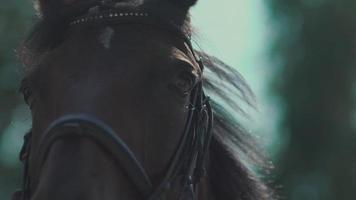 los ojos del caballo. bozal de caballo. caballo parpadeando en cámara lenta video