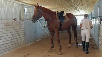 paseos a caballo. preparando. video