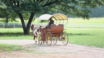 non identificare in carrozza trainata da cavalli guidare in fattoria
