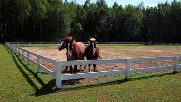 caballos de carreras al aire libre