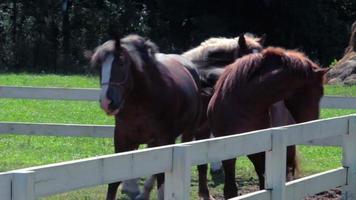hermosos caballos en el prado