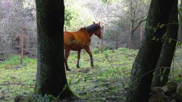 cavalos pastando video