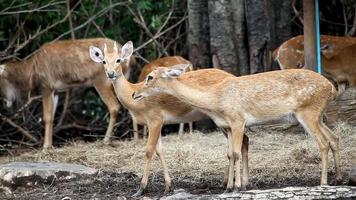 Couple deer video