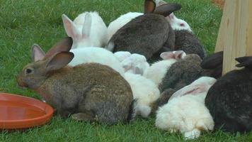 conejos en la granja
