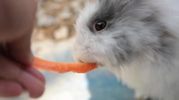 lindos conejos en una jaula comiendo una zanahoria.