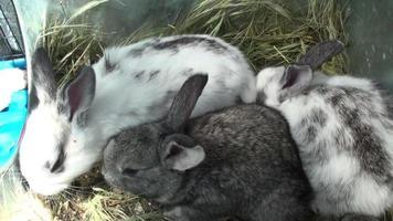 conejos pequeños en la jaula