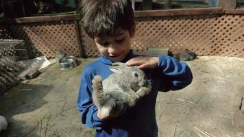 Kid Petting Grey Rabbit video