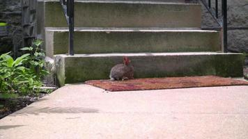 lapin sauvage assis près des escaliers de la maison. petit lapin près des escaliers en béton