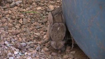 lindos conejos de rabo blanco bebé video